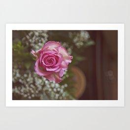 A Rose in Bloom Art Print