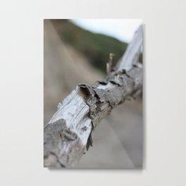 Moeraki Branches (3) Metal Print