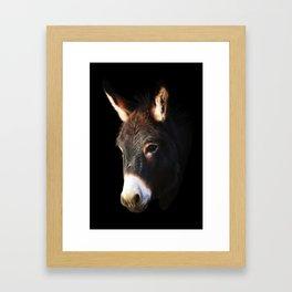 Donkey Black Background Framed Art Print