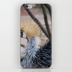 Spiked Hair iPhone & iPod Skin