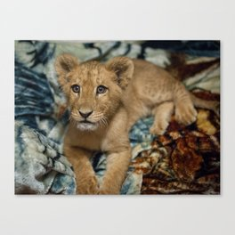 Lambert the Lion and His Blanket Canvas Print