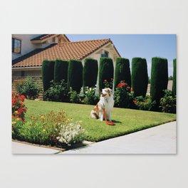 Biggs on Lawn Canvas Print