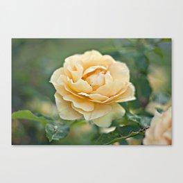 Little Rose Canvas Print