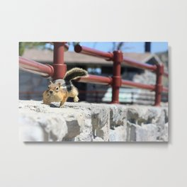 He Comes 'Runnin' For Those Crumbs Metal Print