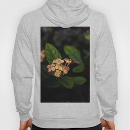 Sweet flowers Hoody