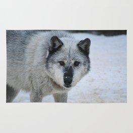 Lone wolf roams the Canadian Rockies Rug