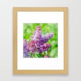 Sweet lilac Framed Art Print