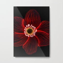 Single Red Flower On Black Metal Print