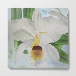 White orchid Cattleya Gaskelliana Metal Print