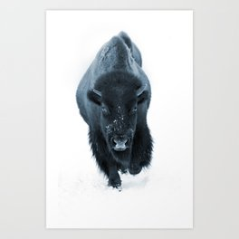 Walking With Bison Art Print
