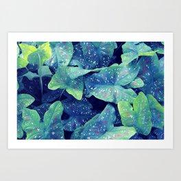 Blue Caladium Art Print