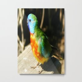 Australian Native Birds Metal Print