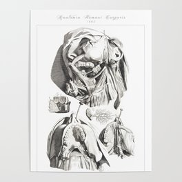 Human Anatomy Art Print JAW TEETHING MANDIBLE Vintage Anatomy, doctor medical art, Antique Book Plat Poster