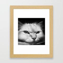 Because Cats Framed Art Print