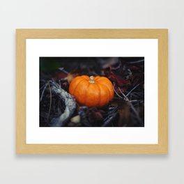 Mini Pumpkin Framed Art Print