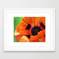 poppy Framed Art Prints featuring POPPY by Teresa Chipperfield Studios