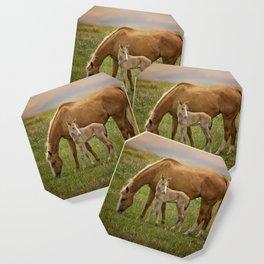Horses Coaster