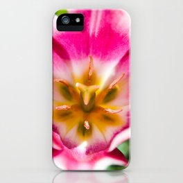 Mauve Tulip Opening in Haines, Alaska by Mandy Ramsey iPhone Case