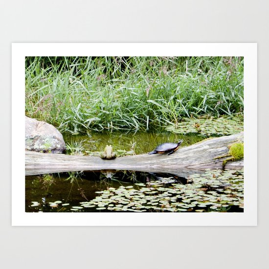 The Turtle and the Frog Art Print