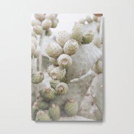 Cactus figs | Barcelona Spain | Travel photography print | Photo art | Greens Metal Print