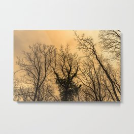 The forest is creepy, naked trees and orange sky Metal Print