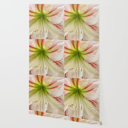 Amaryllis Hippeastrum flower Wallpaper