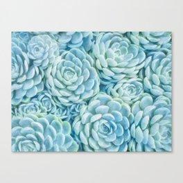 Blue succulents II Canvas Print
