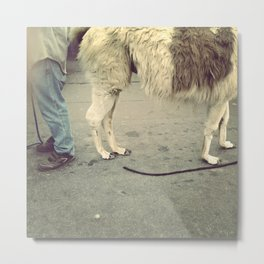 Llama and Man Metal Print