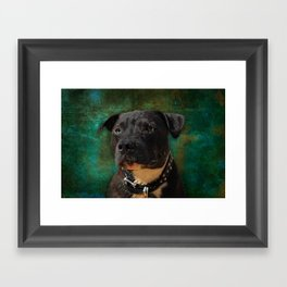 Blue Dog Framed Art Print