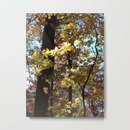 Autumn Light II Metal Print