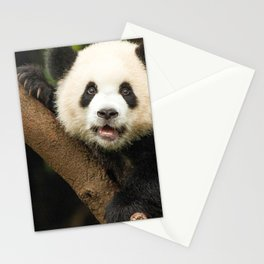 Magnificent Panda Bear Sitting On Tree Branch Observing Camera Close Up Ultra HD Stationery Cards