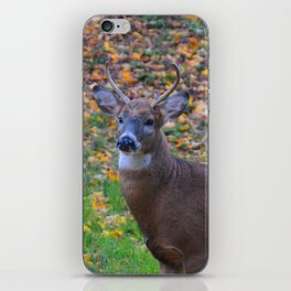 Curiosity of Youth iPhone Skin