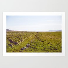 Sheeps in Iceland Art Print