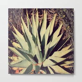 Agave Plant of Arizona Metal Print
