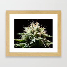 Cannabis Pineapple Chunk Framed Art Print