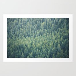 Forest Immersion Art Print