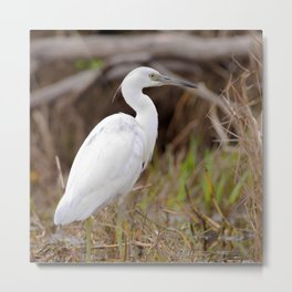 Watercolor Bird, Little Blue Heron 03, Merchants Millpond, North Carolina, Swamp Fisher Metal Print