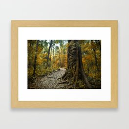 Bunya treasure Framed Art Print