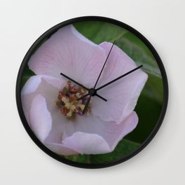 Quince tree flower Wall Clock