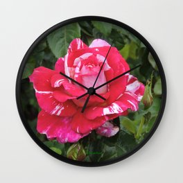 "A Rose Named ""Neil Diamond"" Wall Clock"