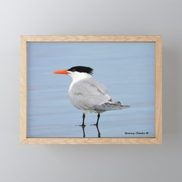 An Elegant Tern Framed Mini Art Print