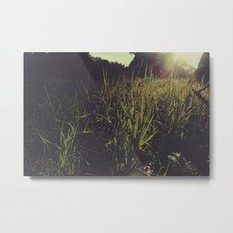 Indiana Grassy Sunshine Metal Print