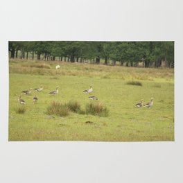 Flock Of Ducks Rug