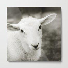 Lamb Sheep Metal Print