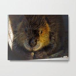 Beaver Fever Metal Print