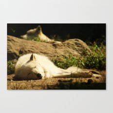 Sleeping white wolf in the summer sun Canvas Print