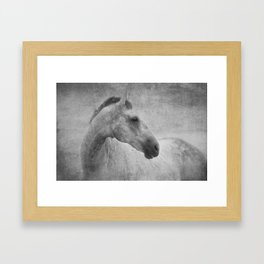 Beautiful Grey Horse  Framed Art Print