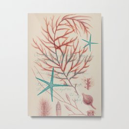Sea Life 3  Metal Print