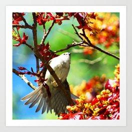 Colors of Spring Bird Art Print