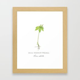 Small Whorled Pogonia - Rare Orchid Framed Art Print